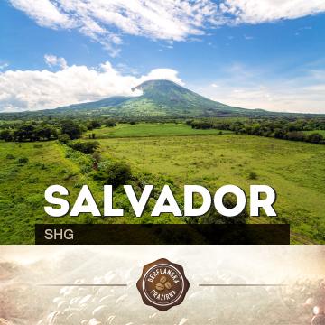 Salvador SHG